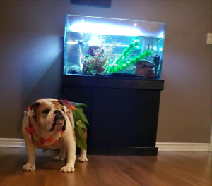 60 gallon frameless aquarium with stand and led
