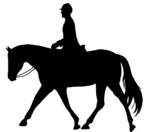 English Riding Lessons Horse Equestrian