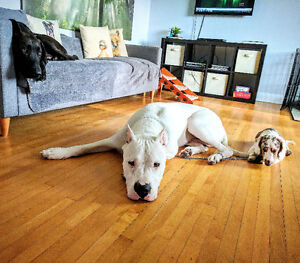 Muttley's Pet Center - Dog Sitting, Boarding and much more!!