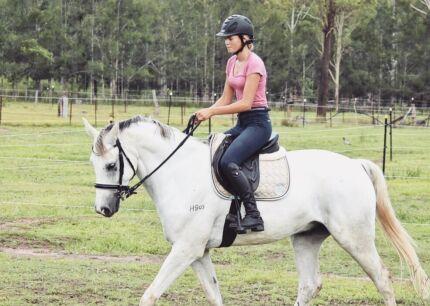 Horse exercising/training