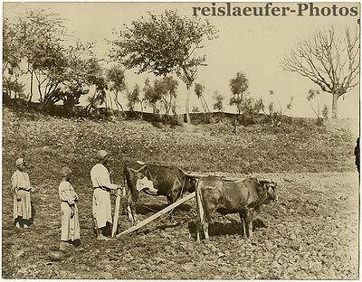 Ägyptische Bauern, Großes Original-Foto von ca. 1900