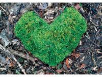 Restorative Autumnal Day Retreat; meditation, community, nature.