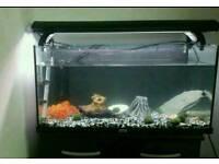 Juwel 120L fish tank Aquariam