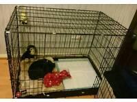 LX Dog Cage