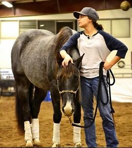 Passion Equine- Riding Lessons