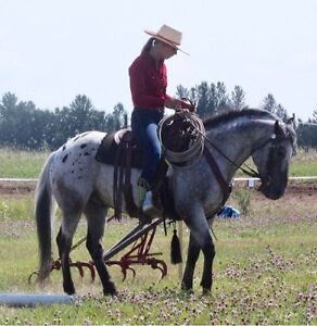 ApHC Reined Cow Horse For Sale