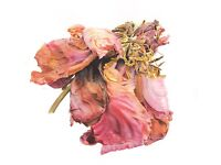 BOTANICAL PAINTING COURSE - SATURDAY MORNINGS AT STONEHOUSE LIFESTYLES