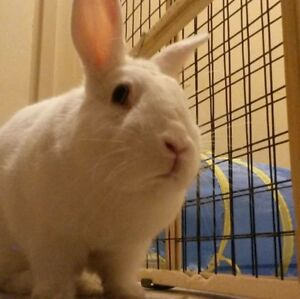 (Free) 2 Bunnies available to a good Home