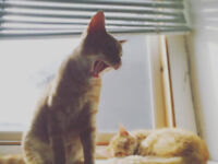 2 cats gone missing