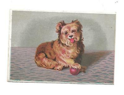 Brown Dog Tongue Sticking Out Ball No Advertising Vict Card c1880s