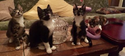 URGENT URGENT RESCUED SIBLINGS NEED LOVING HOMES