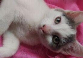 Last kitten left for loving home