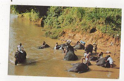 Elephants Bathing In The Mahaweli Ganga Katugastota Ceylon Postcard 811a