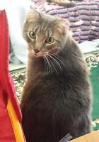 "Young Male Cat - Tabby - Brown: ""Sam"""