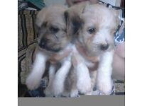 puppies 2 Girls