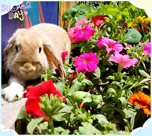 2016 harvested hay for bunny rabbit Guinea pig