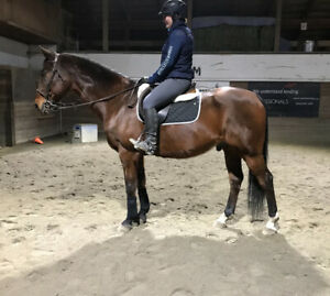 Schoolmaster Available for Lease