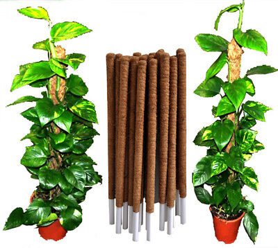 COCO POLE COCONUT COIR FIBRE PLANT SUPPORT STAKE 4 FEET 1.2 m PACK OF 2