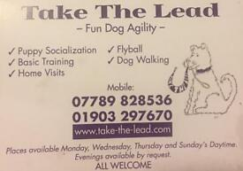 Take the lead dog train agility flyball pet sitting dog walking