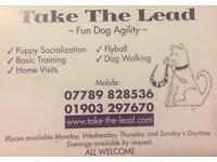 Take the lead dog train agility flyball pet sitting dog walking