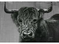 Highland Cow Fine Art Prints, free UK/EU Delivery