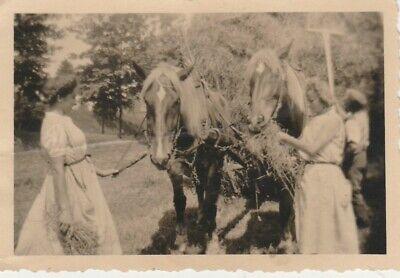 Foto Frauen bei der  Heuernte Pferd'e Gespann - 50er Jahre Frauen