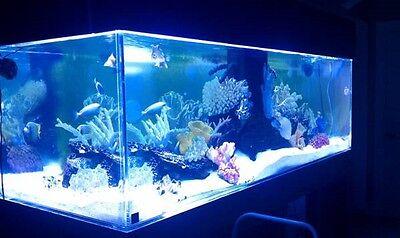 Custom Acrylic Aquarium You Can Build For MUCH LESS than Retail