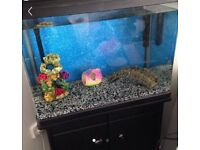 Fish tank with cupboard/stand