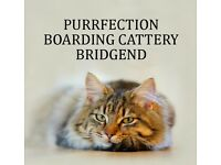 Purrfection Boarding Cattery, Bridgend