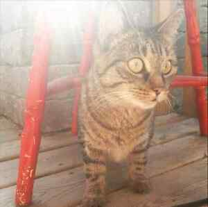 Friendly beautiful female cat