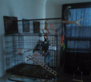 Parrot cage or large dog cage