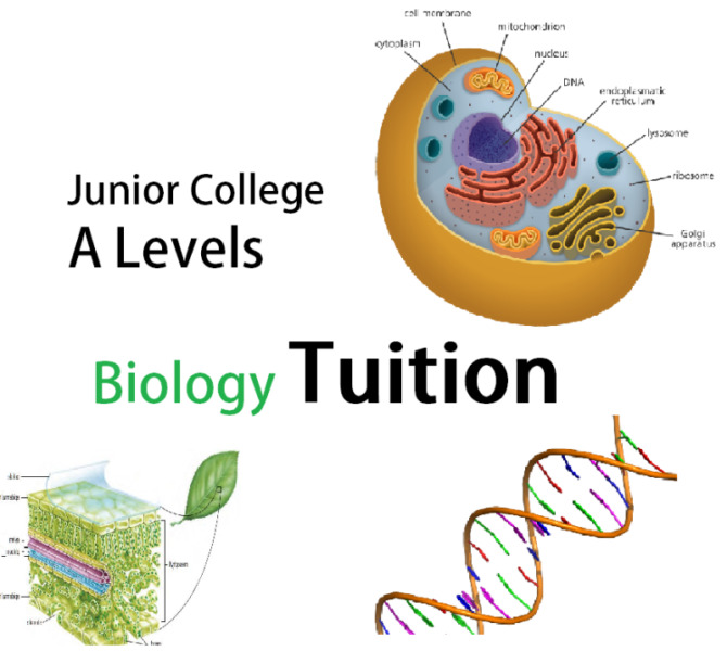 Biology Tuition, A Levels Junior College or IB. Taught by local medical student