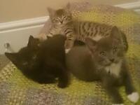 Three male kittens