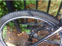 For sale Barracuda mountain bike