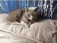 Cat lost in Stroud Green