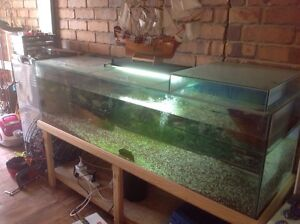 6FT Turtle Tank Andrews Farm Playford Area Preview
