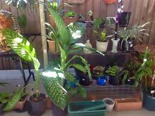 Heaps of Plants!! Ornaments! Decor and MORE!! Point Vernon Fraser Coast Preview