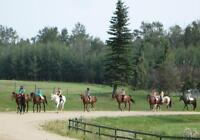 Horseback Riding Lessons,Camps, Lease Horses