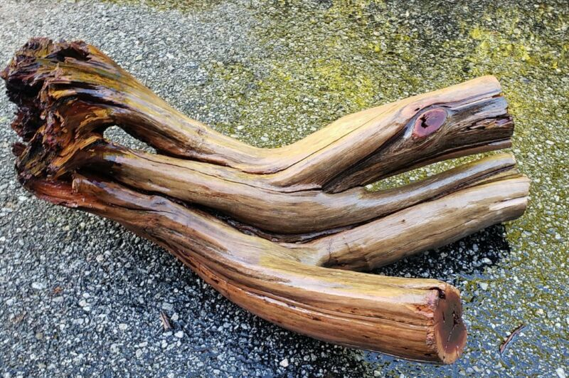 Large Manzanita Driftwood aquarium terrarium aquascape crafts stump swim thru