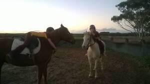 GORGEOUS REGISTERED QUARTER HORSE GELDING 9YRS 14H Koorda Koorda Area Preview