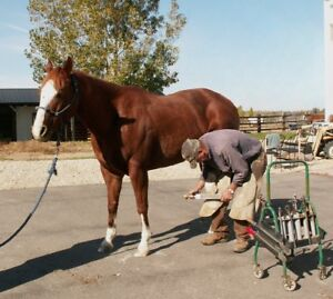 Rob Teit    Certified Jouneyman Farrier  250-574-6838