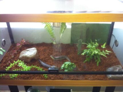 Glass reptile tank  Cronulla Sutherland Area Preview