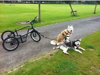 Dog trike with connections