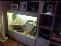 3 level custom build vivarium