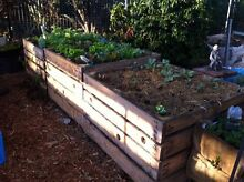 Looking for backyards to grow my vegetables in Eight Mile Plains Brisbane South West Preview