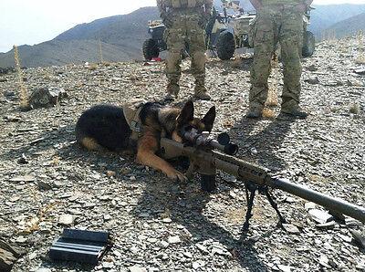 Navy Seals Well Disciplined Dog Taking Aim At Target High Gloss 8.5x11 Photo