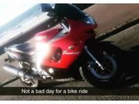 Yamaha Thundercat for sale