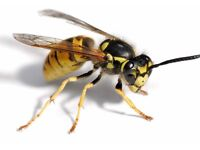 WASP NEST REMOVAL & ANT TREATMENTS