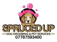 DOG GROOMING & WALKING - SPECIAL OFFER £20 FOR WASH & BLOW DRY (INC NAIL CLIPPING & EAR CLEANING)