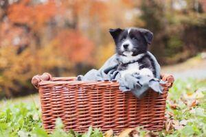 Dog sitting (+ free photo shoot)